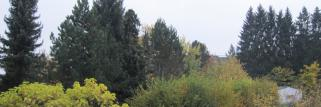 Ein grauer Herbsttag beginnt,aber die Herbstfarben bleiben erhalten