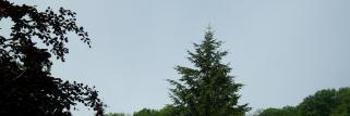 Thann  (Haut -Rhin) 343 m