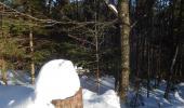 Meierskopf : es fiel seit 10.01.2017 etwa ein halber Meter Schnee, von dem nach knapp 40 cm liegt, an sonnigen Stellen weniger.
