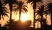 Swakopmund Sundown through palmtrees at the beach. Photo Courtesy M.Reiber