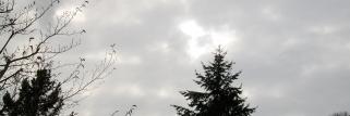 Thann(Haut-Rhin)343m