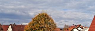 heubergwetter: am morgen hohe dünne wolken, die nun dicker werden.