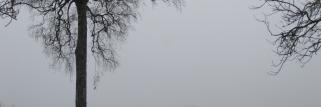 Nebel und nass Kalt!