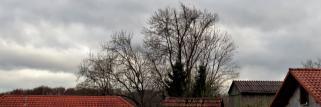 heubergwetter: wolkig und vorhin ein paar zaghafte sonnenstrahlen.