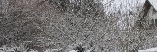 Neu-Schnee ziehen der Landschaft wieder ein weißes Kleid über!