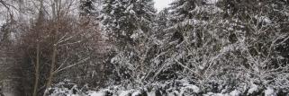 Winter-und eine feste Schnee-Decke!