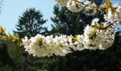 Le printemps s'installe lentement.