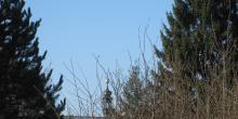 Frischer Morgen in der Residenzstadt und dazu blauer Himmel!