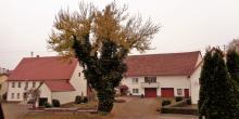 heubergwetter(sw-alb): herbstfeeling, kühl, dicke wolken und dichter nebel.
