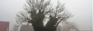 heubergwetter(sw-alb): dichter nebel und nasskalt.