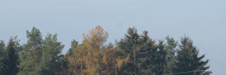 Nach starkem Nacht-Frost -5°C, jetzt Sonne !