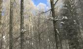 Schneelast auf den Bäumen: Laubbäume fangen mehr Schnee auf, der zum Abbrechen der Äste führen kann.